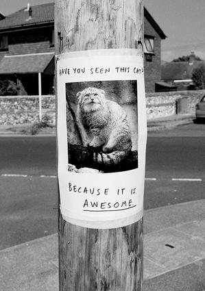 missingcat_ybnby