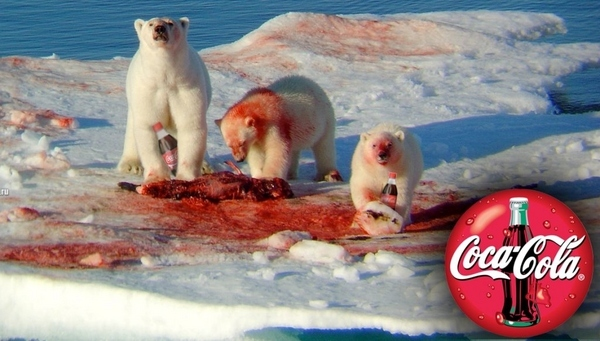 Polar bear eating seal coke - photo#1