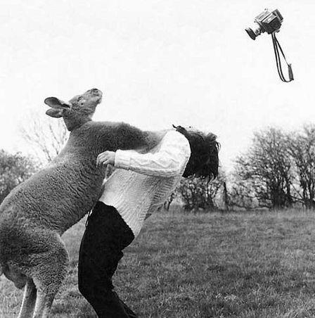 http://loyalkng.com/wp-content/uploads/2009/03/kangaroo.jpg