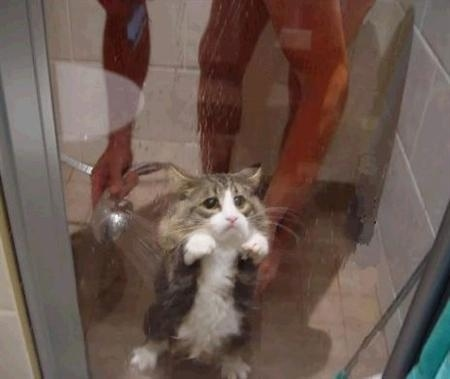 shower-cat. Poor kitty cat! If I didn't know better I figured it was a mouse