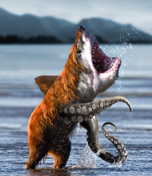 bearsharktopus-bear-shark-octopus-manbea