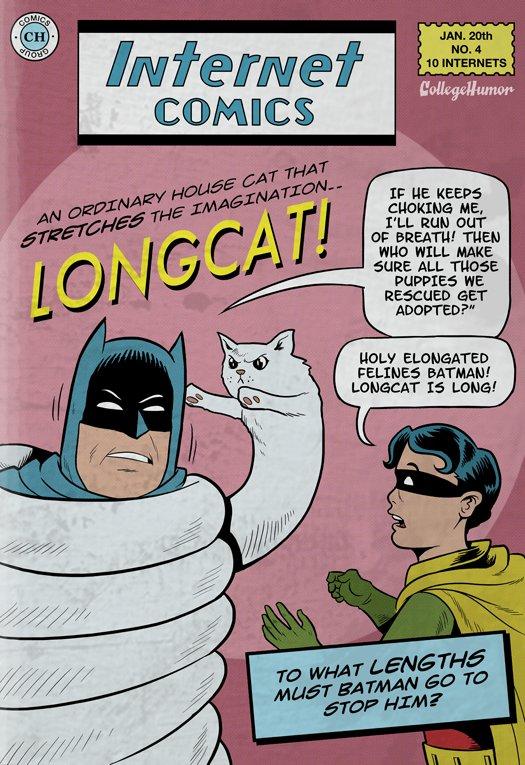 batman joker meme catwoman - photo #22